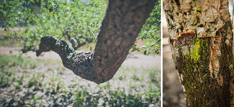 Random stuff-Canberra Photographer