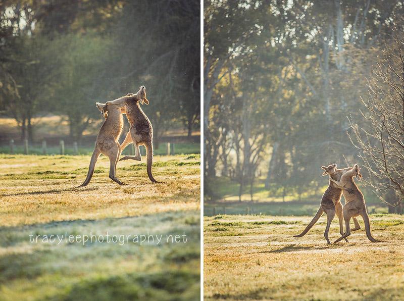 Tracy Lee Photography  I  Australian Wildlife